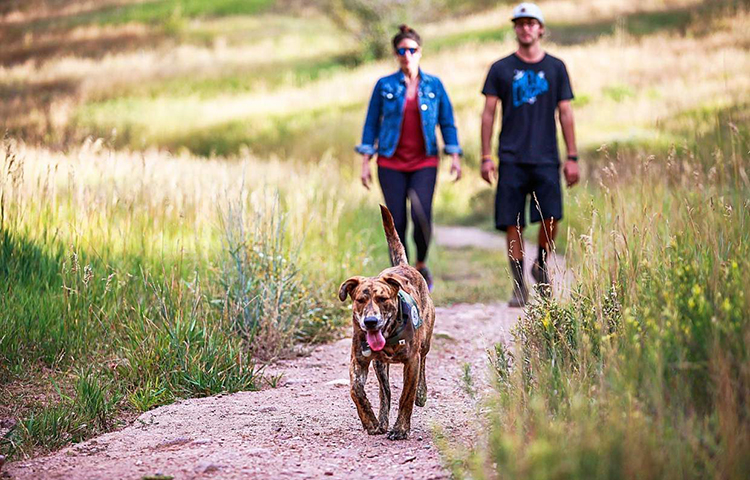 Odin, a brindle lab-mix, walks ahead of Michelle Luarita and Jason Funk, of Avon, recently on Meadow Mountain Trail